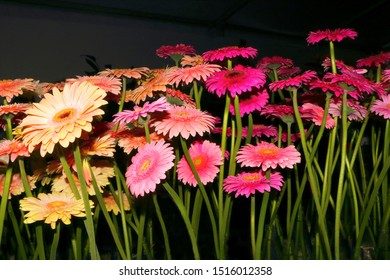 Flower Festival in Madeira, here an extraordinary perspective of pink, rose and orange gerberas