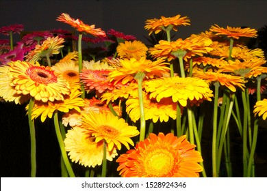 Flower Festival in Madeira, here an extraordinary perspective of orange and yellow gerberas