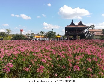 flower field aesthetic
