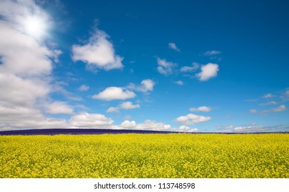 Flower field and blue sky with sun