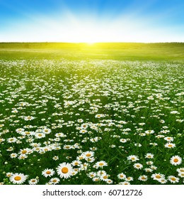 Flower field and blue sky with sun.