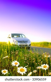 Flower field  and car.