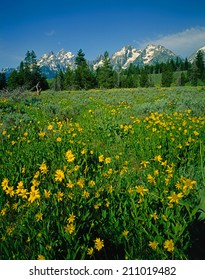 Flower field on Grand Teton
