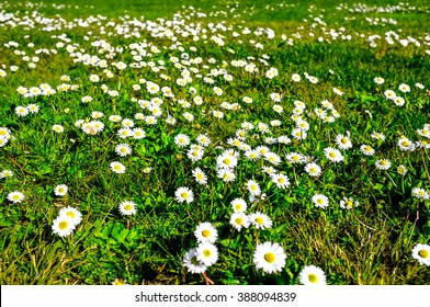 flower field in springtime