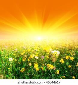 Flower field and sun.