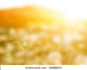 flower field,abstract blur background for web design,colorful, blurred, wallpaper,