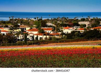 Flower Fields California