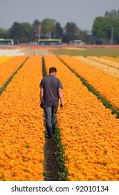 Flower fields nearby Keukenhof