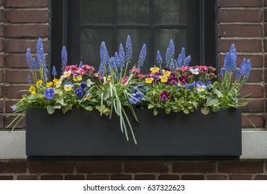 Planter Box Images Stock Photos Vectors Shutterstock