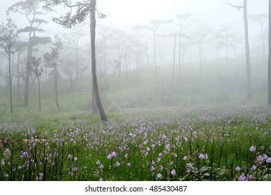 Flower in Foggy, Phu Soi Dao mountain national park, Uttaradit, Phitsanulok, Thailand