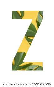 Flower font Alphabet Z made of Real alive flowers monstera on yellow background with paper cut shape of letter. Collection of flora font for your unique decoration in summer