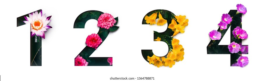 Flower font number 1, 2, 3, 4 Create with real alive flowers and white background cut shape of Number. Collection of brilliant bloom flora font for your unique text, typography with many concept ideas