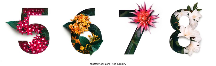 Flower font number 5, 6, 7, 8 Create with real alive flowers and white background cut shape of Number. Collection of brilliant bloom flora font for your unique text, typography with many concept ideas