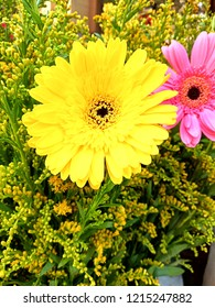 Flower Full Hd Wallpaper 3 D Photos Stock Photo Edit Now