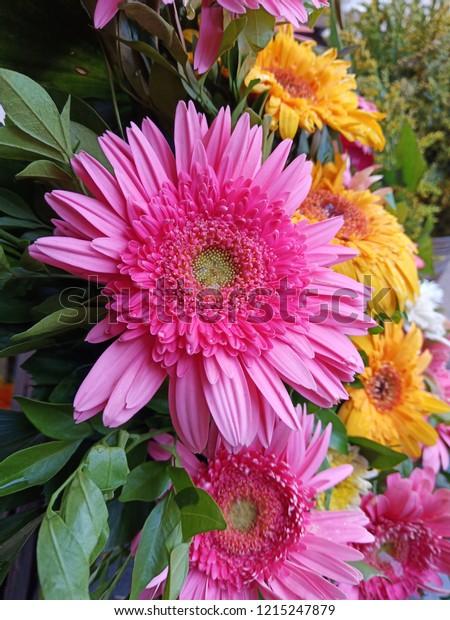 Flower Full Hd Wallpaper 3d Photos Stock Photo Edit Now 1215247879