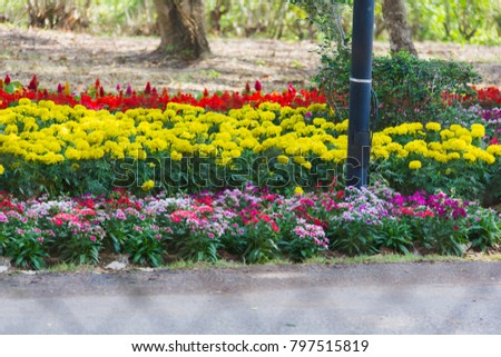 Flower Gardan Steel Net Foreground Stock Photo Edit Now 797515819