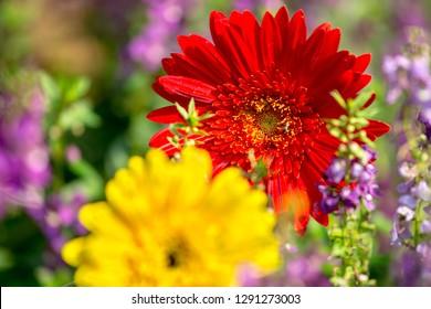 The flower in the garden.