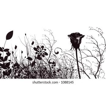 a flower and garden background