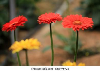 flower garden background