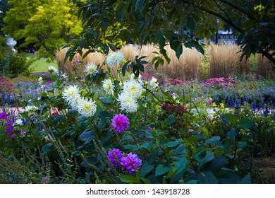 flower, garden, bloom , color, nature