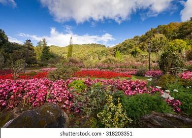 Flower garden with blue sky