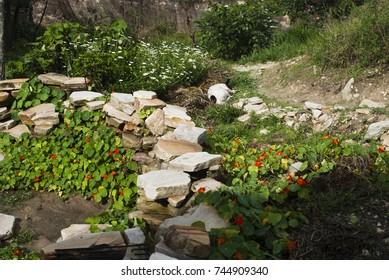 Flower garden in Brazil