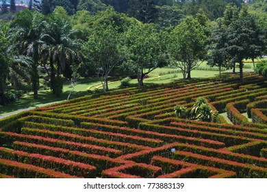flower garden labyrinth from top view.