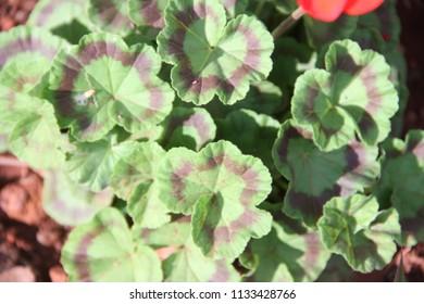 Flower garden nature colours  - Shutterstock ID 1133428766