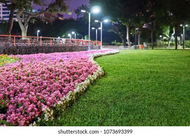 flower garden in night