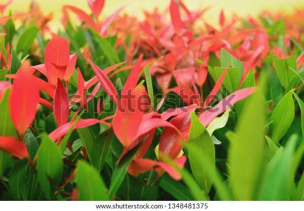 Flower Garden Photos Stock Photo Edit Now 1348481375