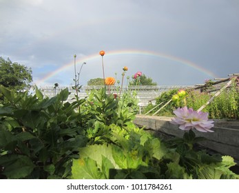 Flower garden with rainbow in background