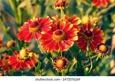 Flower in garden at sunny summer or spring day. Flower for postcard beauty decoration
