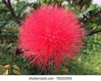 Flower In Garden Thailand