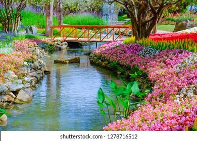Flower garden, winter flower in Thailand, beautiful flower, straw flower. Tulip.