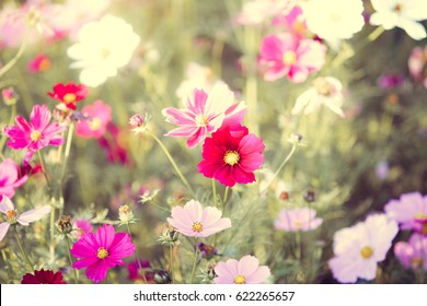 Flower garden,flower bouquets,Close-up.