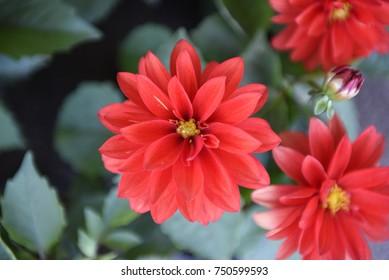 Flower in gargen