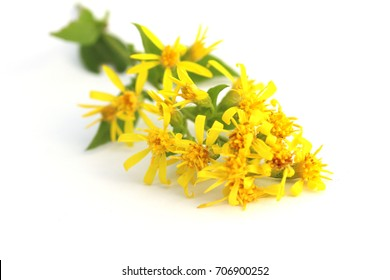 Flower of goldenrod (Solodago virgaurea). Goldenrod is used to reduce pain and swelling (inflammation), as a diuretic to increase urine flow, and to stop muscle spasms.