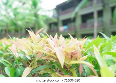 The flower of the grass, Blur Background