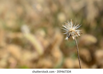 Flower grass field