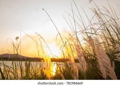 Flower grass has morning light.