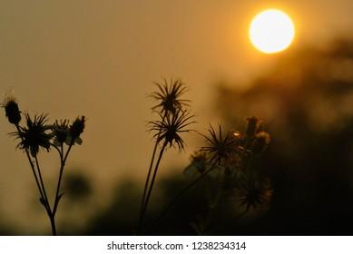 Flower grass. flower. natual.