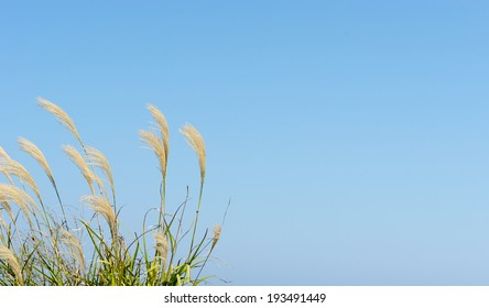 flower of grass on a sky background