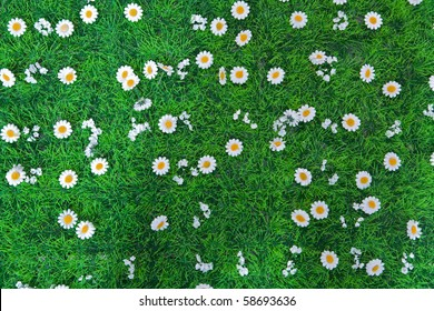 flower and grass on a sky background