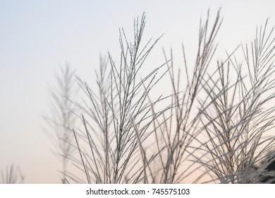 Flower grass on sky background