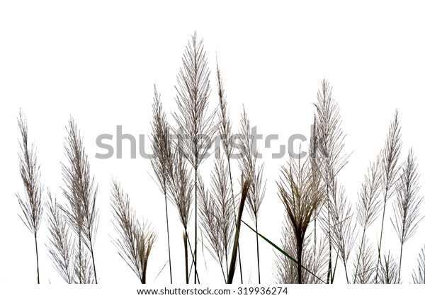 Flower grass on white sky.