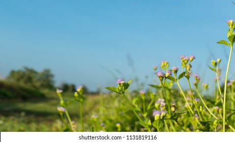 Flower grass with sky blue background