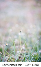 flower grass in summer