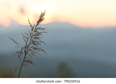 Flower grass and sunrise background in the evening with unset scene.