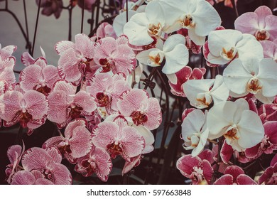 flower in greenhouse
