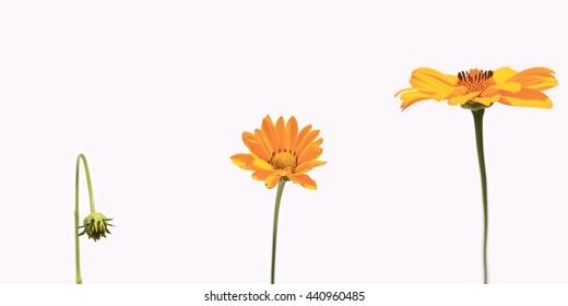 flower growing